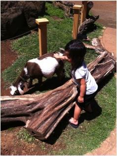 Petting zoo area.